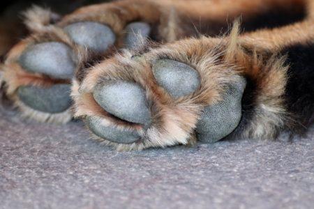 dog-paw-3612394_1920